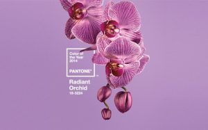 orquidea-radiante