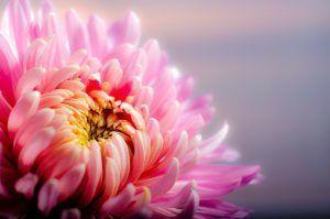 flor-alta-resolucion